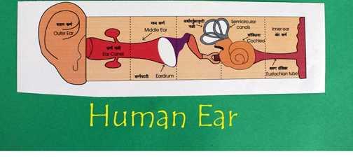 Kulak Maketi Kalıplı Boyama Sayfası