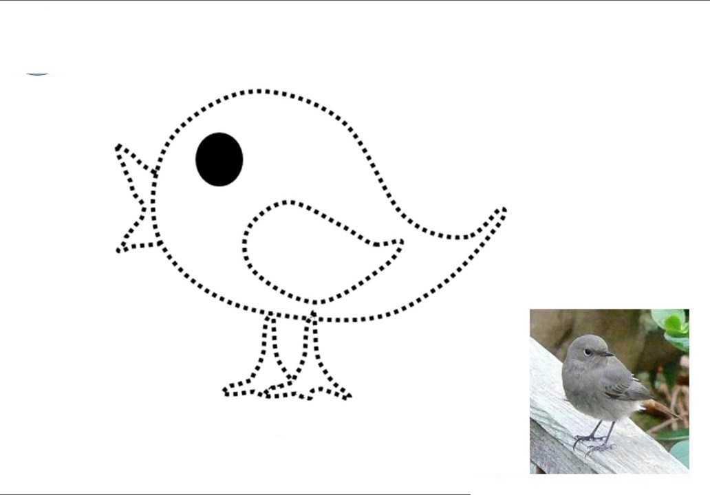 Hayvanların Gerçek Resimlerle Boyama Ve Çizgi Çalışması