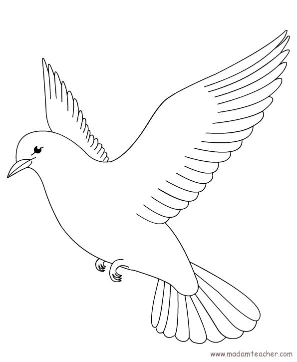Kuşlar 2 Okul öncesi Etkinlik Faliyetleri Madamteachercom