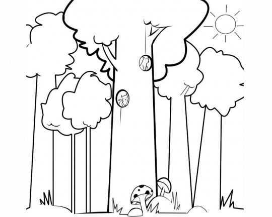 Orman Haftasi Etkinlikleri 11 Okul Oncesi Etkinlik Faliyetleri