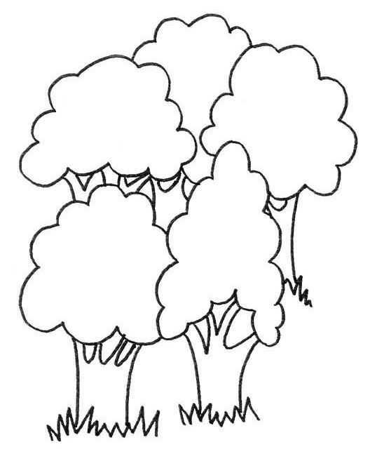 Orman Haftasi Etkinlikleri 5 Okul Oncesi Etkinlik Faliyetleri