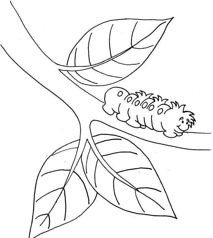 Okul öncesi Kelebeğin Oluşum Kartları Okul öncesi Etkinlik