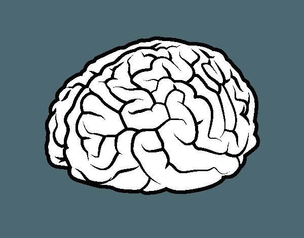 Okul Oncesi Beyin Organi Boyama Sayfasi Okul Oncesi Etkinlik